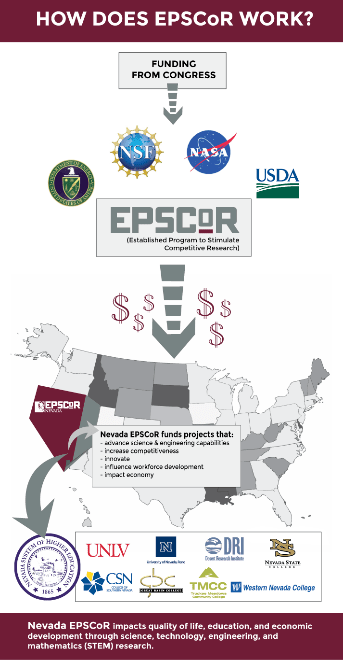 How does EPSCoR Work, Infographic
